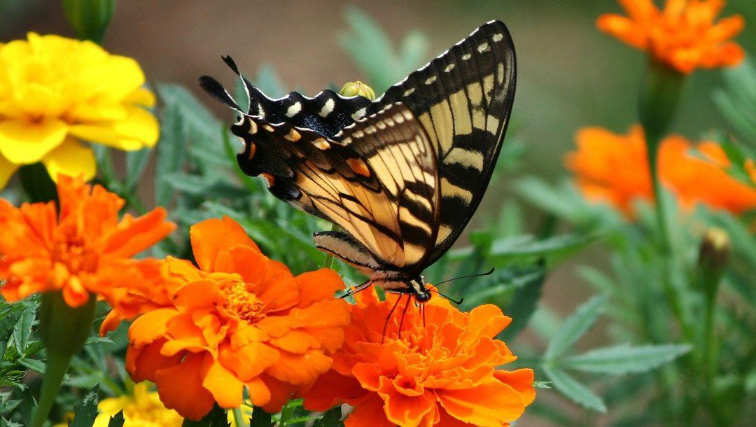 Spring Renewal: Writers and Websites